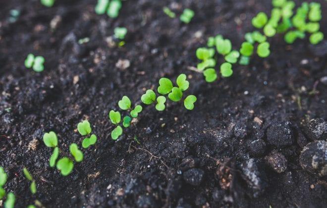 rucola-salad-plant-leaf